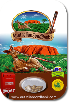 cannabis-seeds-shipped-inside-australia